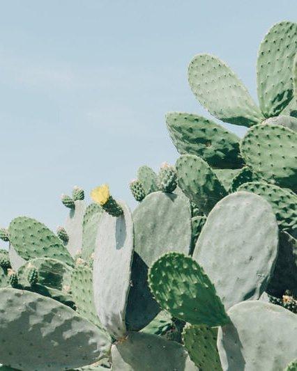 pixasquare_com-cactus-plant-04656-2